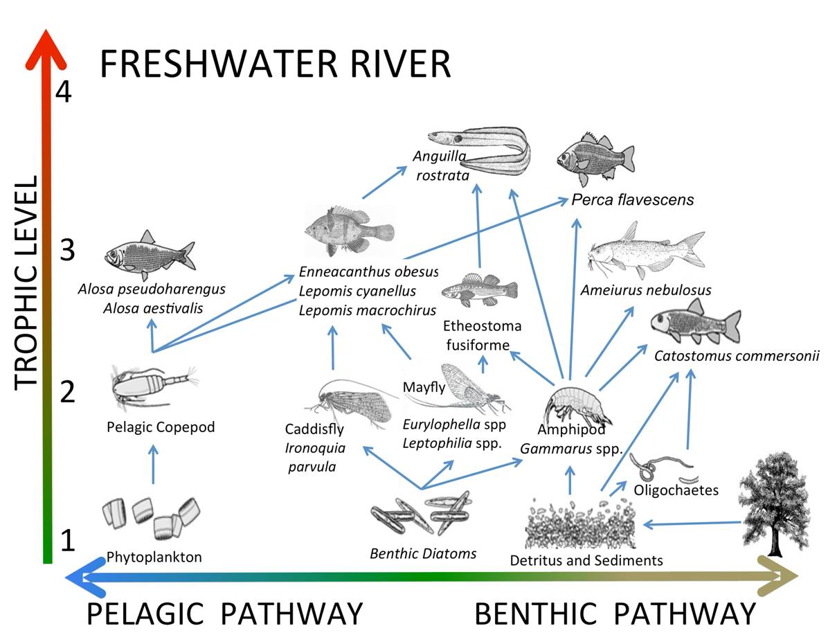 trophic structure plum island ecosystems Freshwater Lens trophic structure